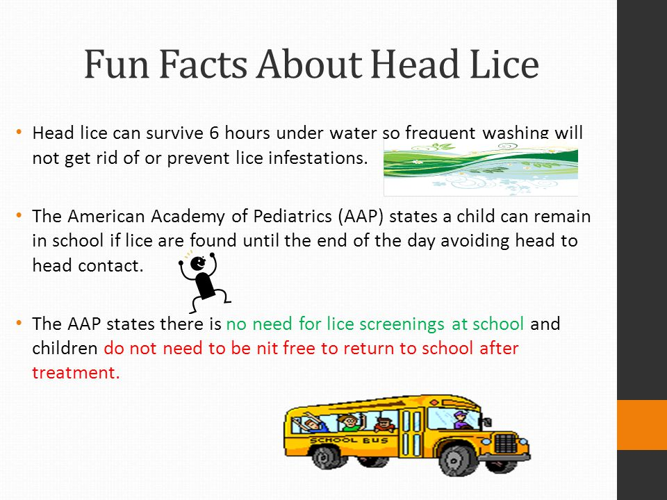 Fun Facts About Head Lice