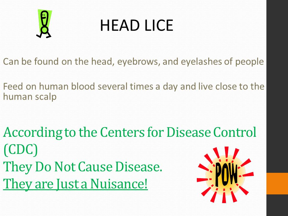 HEAD LICE Can be found on the head, eyebrows, and eyelashes of people. Feed on human blood several times a day and live close to the human scalp.