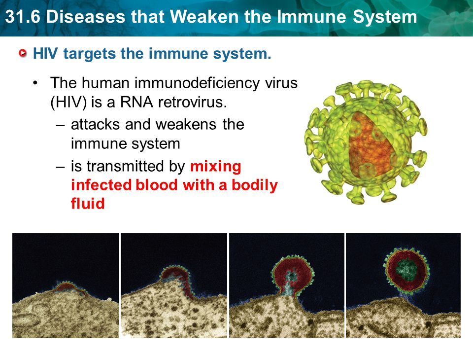 HIV targets the immune system.