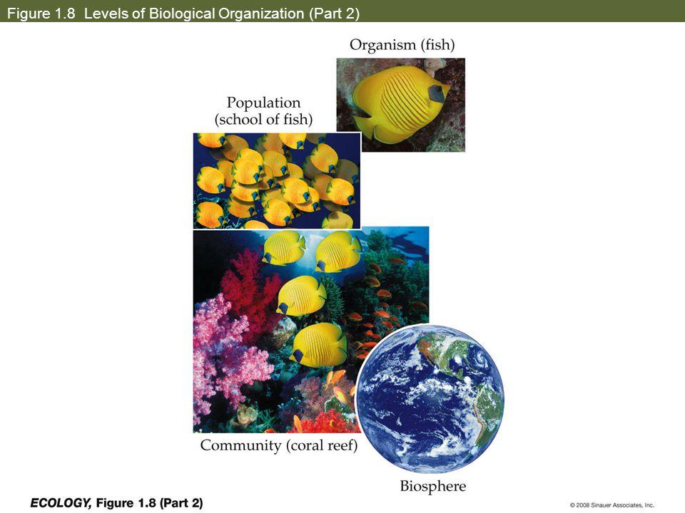 Figure 1.8 Levels of Biological Organization (Part 2)