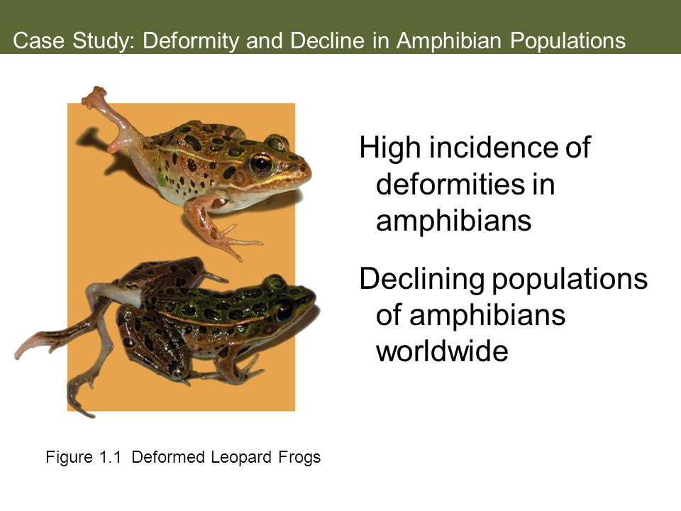 Case Study: Deformity and Decline in Amphibian Populations