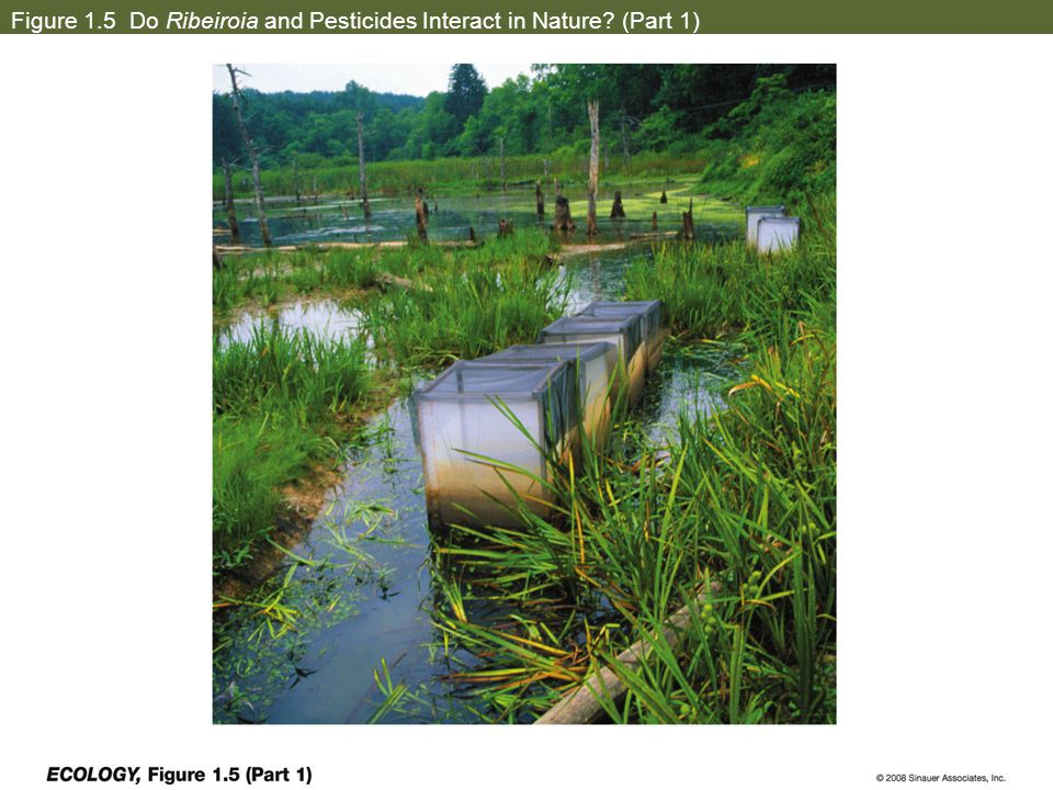 Figure 1.5 Do Ribeiroia and Pesticides Interact in Nature (Part 1)