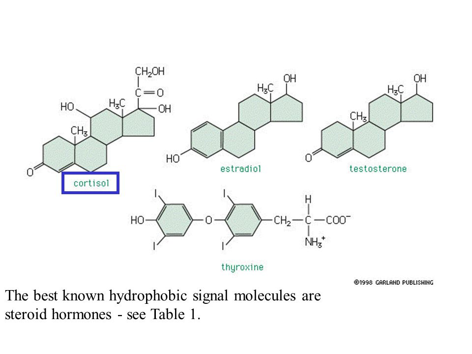 The best known hydrophobic signal molecules are steroid hormones - see Table 1.
