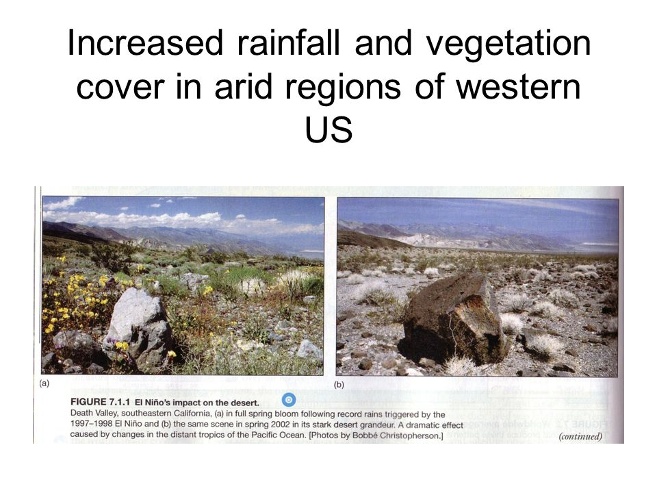 Increased rainfall and vegetation cover in arid regions of western US