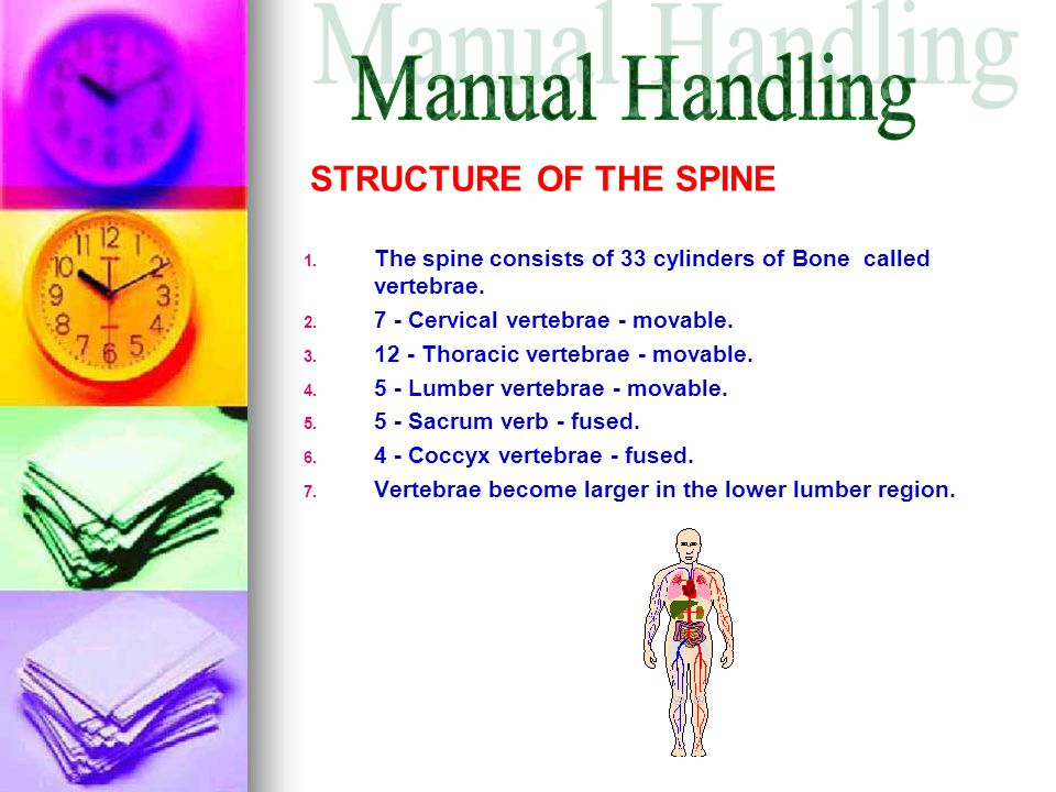 Manual Handling STRUCTURE OF THE SPINE