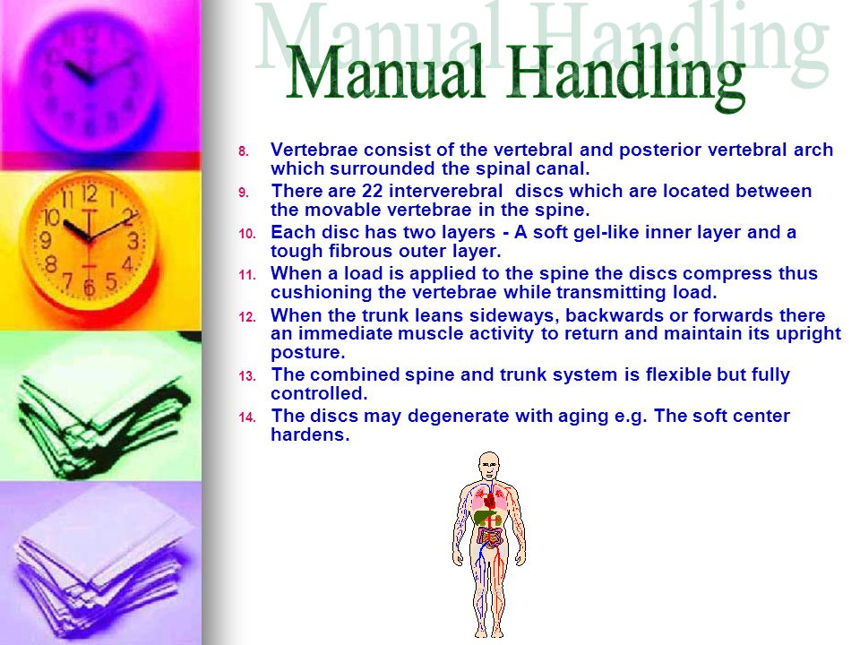 Manual Handling Vertebrae consist of the vertebral and posterior vertebral arch which surrounded the spinal canal.