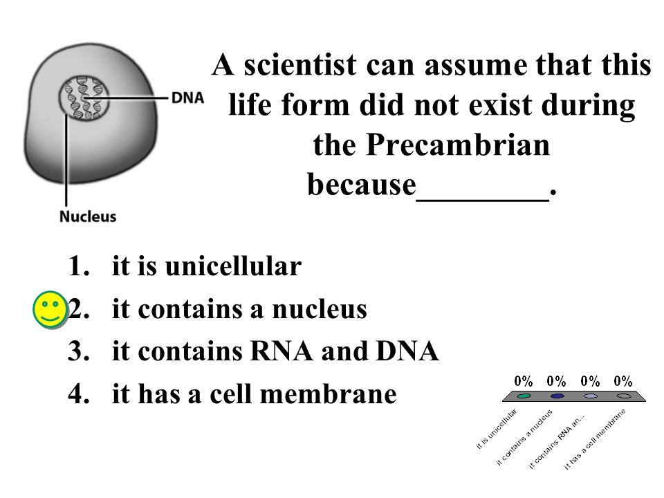 A scientist can assume that this life form did not exist during the Precambrian because________.