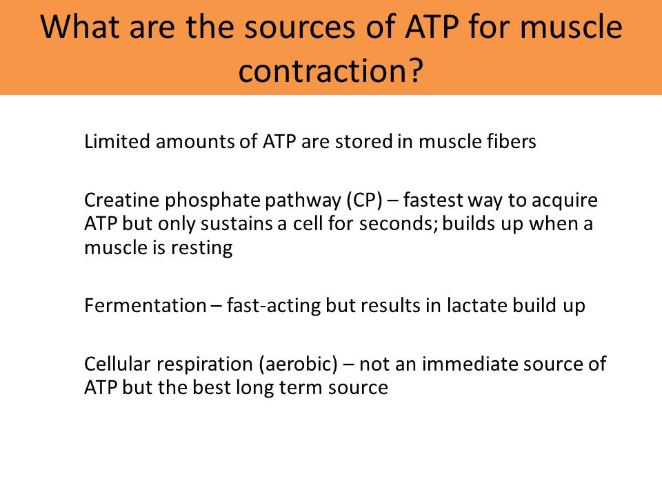 What are the sources of ATP for muscle contraction