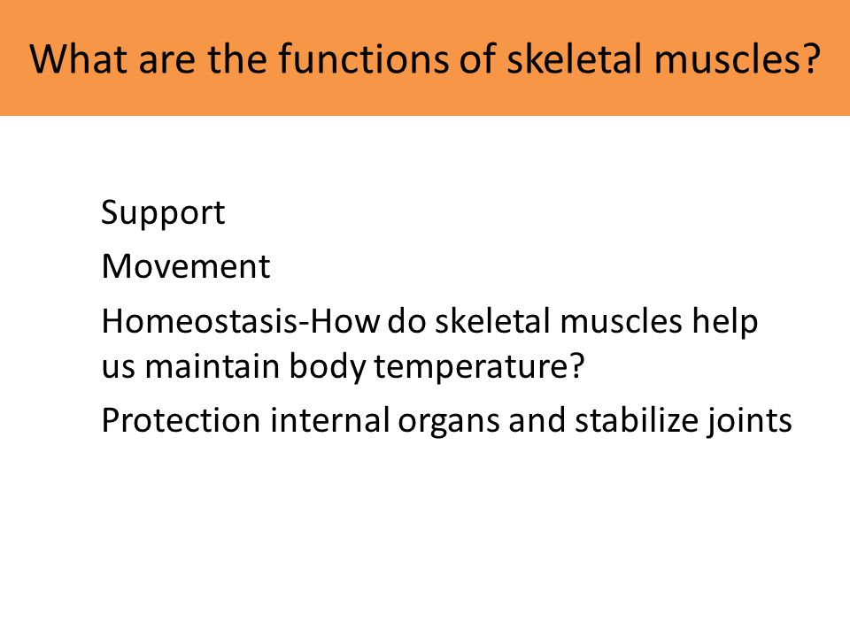 What are the functions of skeletal muscles