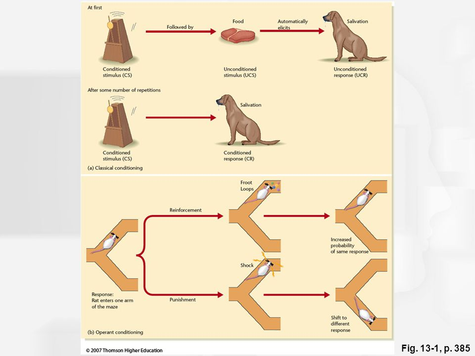 Figure 13.1: Procedures for classical conditioning and operant conditioning.