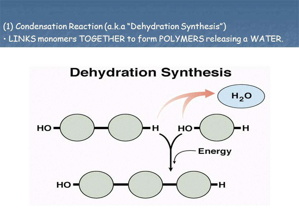 (1) Condensation Reaction (a.k.a Dehydration Synthesis )
