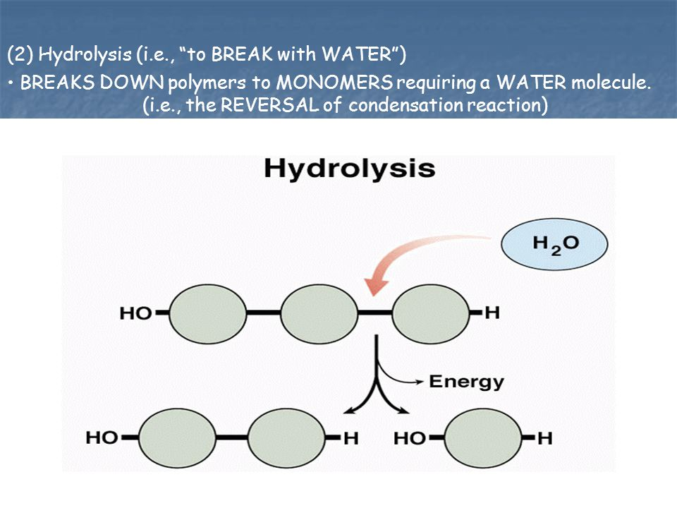 (2) Hydrolysis (i.e., to BREAK with WATER )