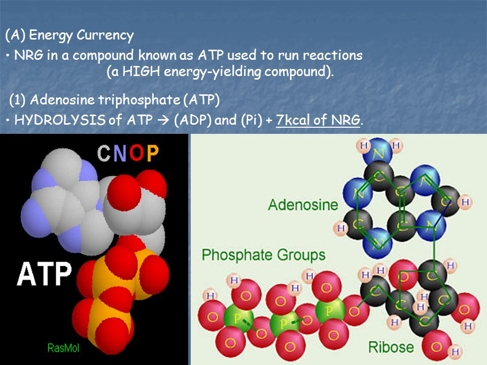 (A) Energy Currency NRG in a compound known as ATP used to run reactions (a HIGH energy-yielding compound).