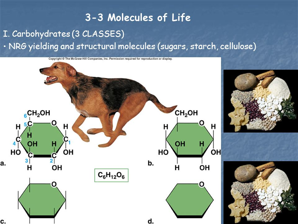 3-3 Molecules of Life I. Carbohydrates (3 CLASSES)