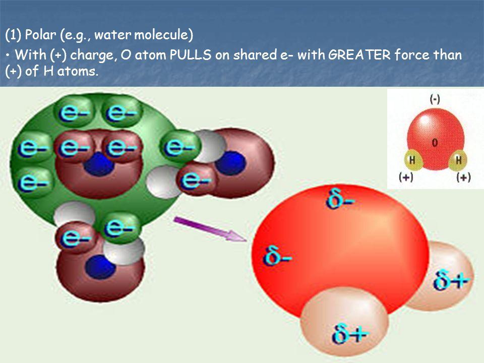(1) Polar (e.g., water molecule)