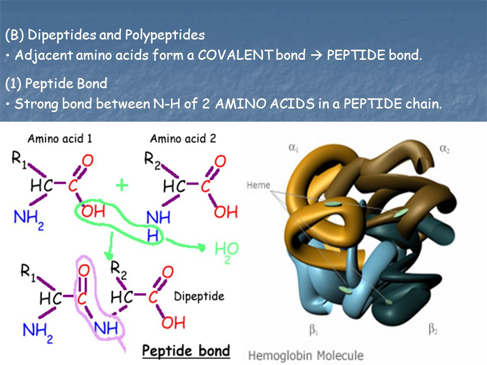 (B) Dipeptides and Polypeptides