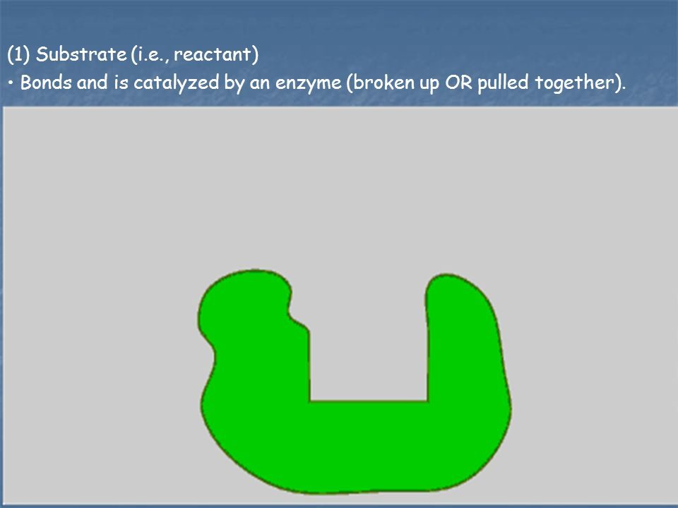 (1) Substrate (i.e., reactant)