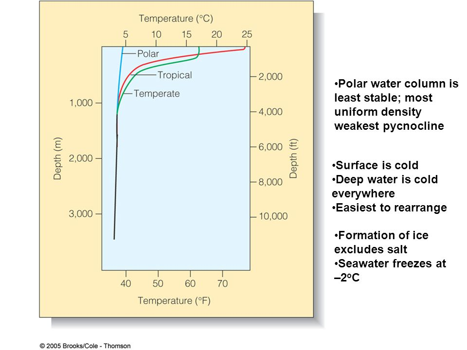 Polar water column is least stable; most. uniform density. weakest pycnocline. Surface is cold. Deep water is cold.