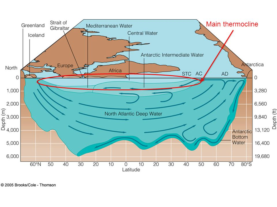 Main thermocline