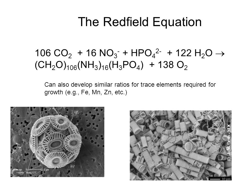 The Redfield Equation 106 CO2 + 16 NO3- + HPO42- + 122 H2O 
