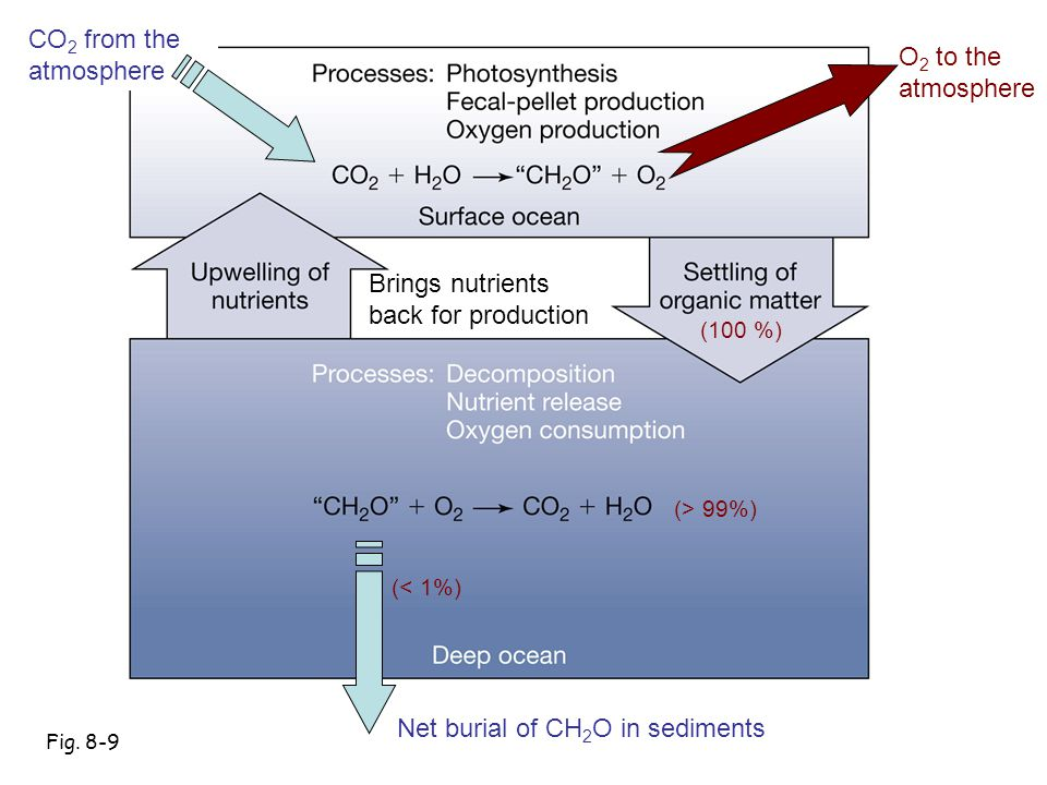 Net burial of CH2O in sediments