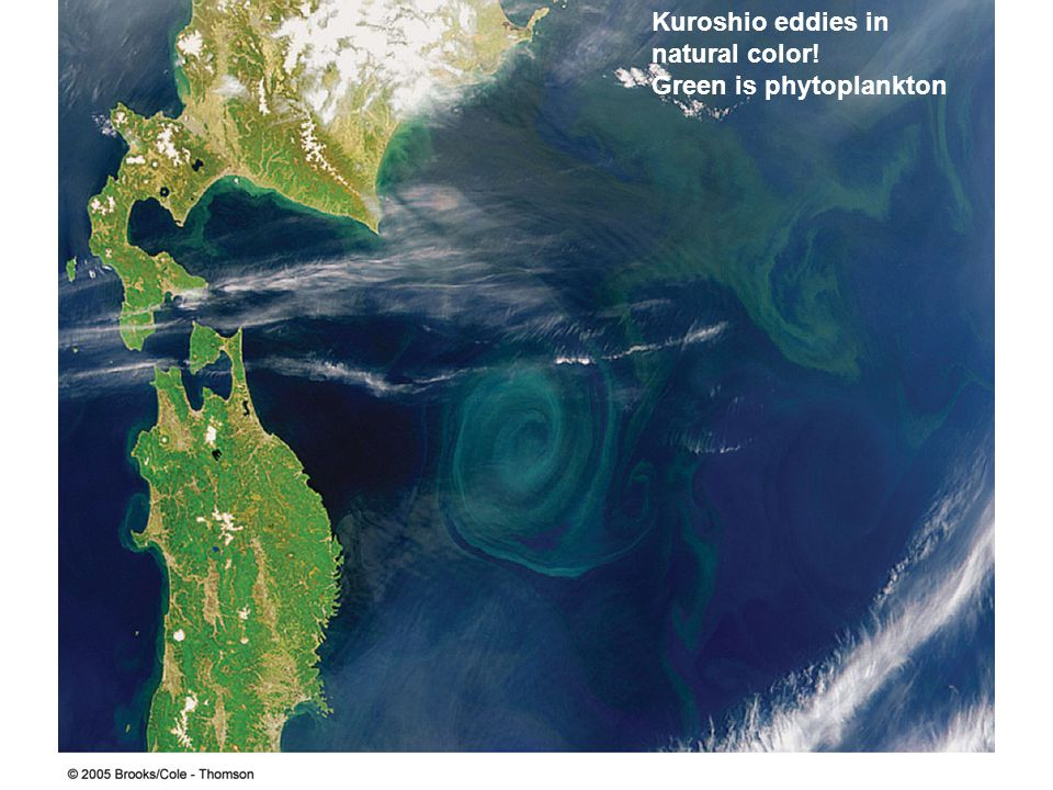 Kuroshio eddies in natural color! Green is phytoplankton