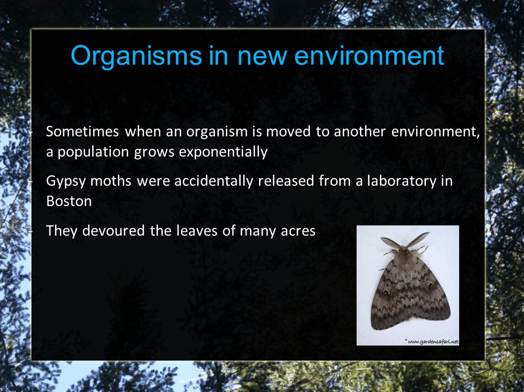 Organisms in new environment