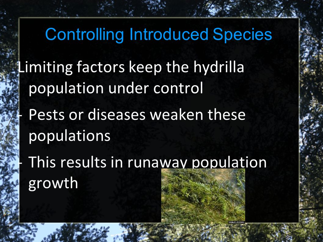 Controlling Introduced Species
