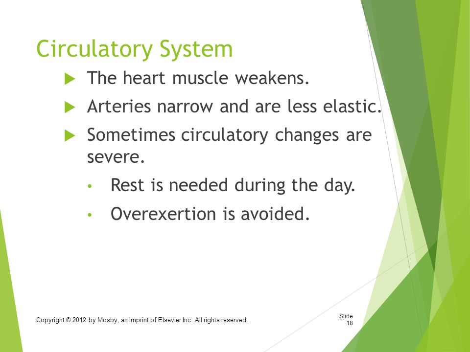 Circulatory System The heart muscle weakens.