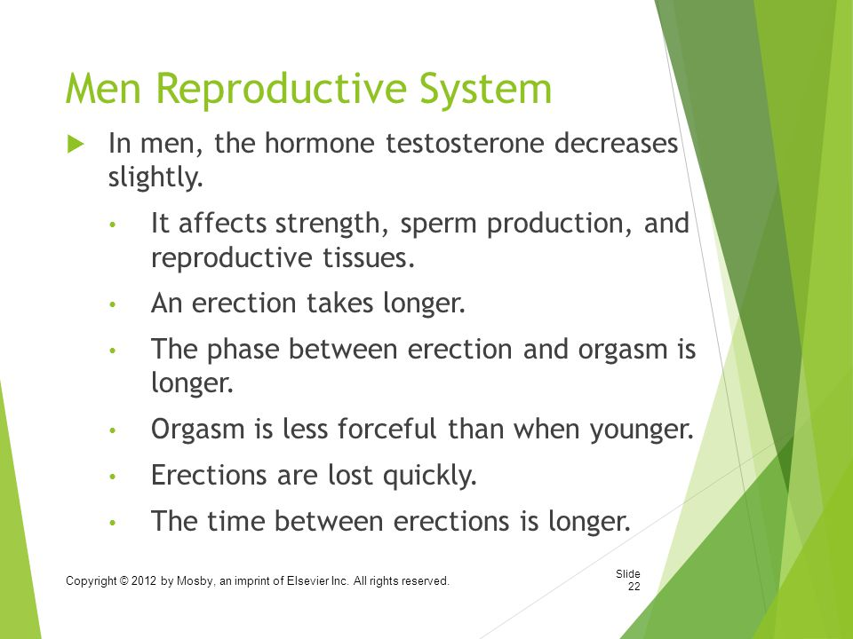 Men Reproductive System