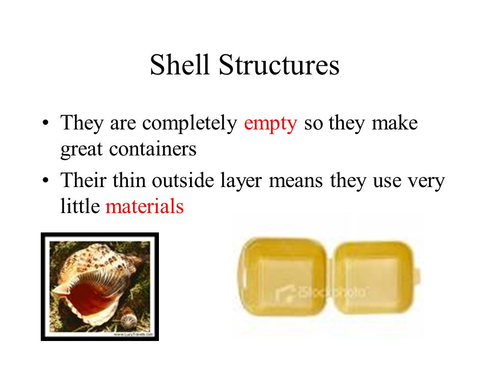 Shell Structures They are completely empty so they make great containers.