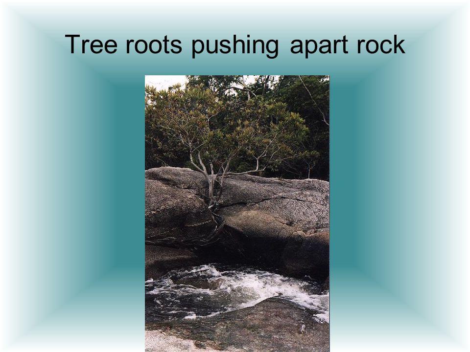 Tree roots pushing apart rock