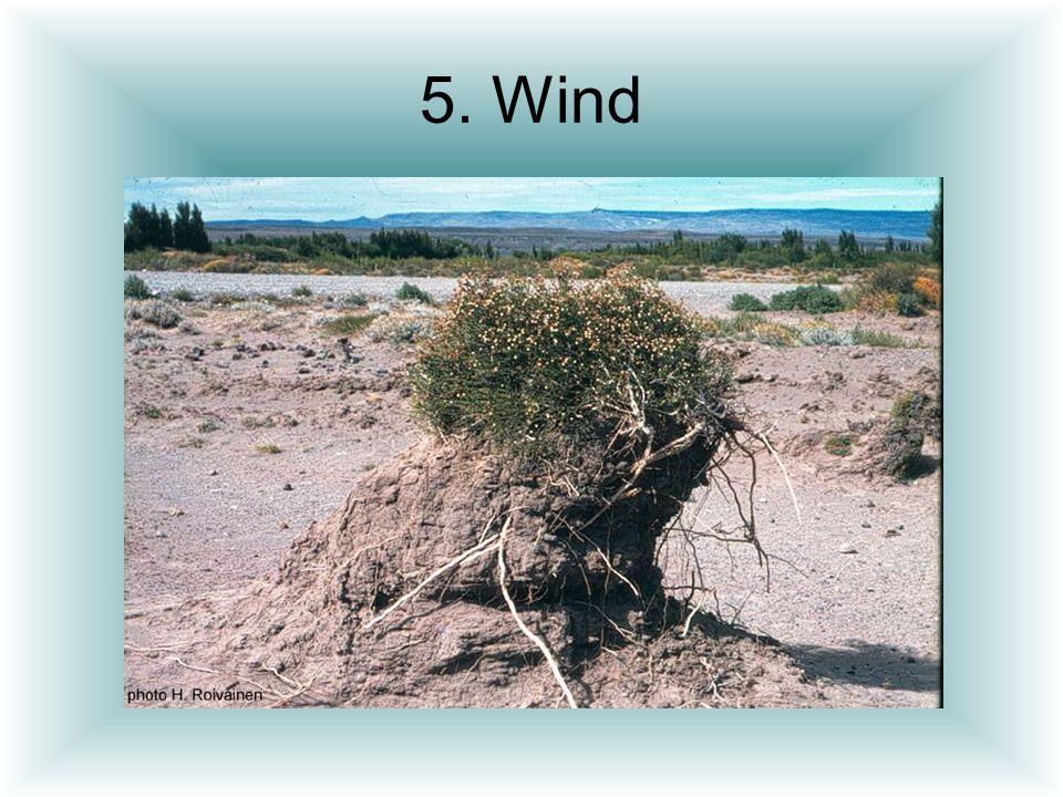 5. Wind