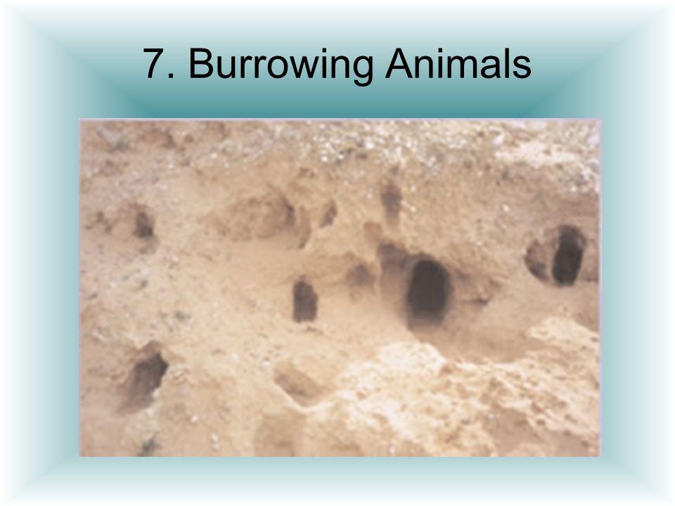 7. Burrowing Animals
