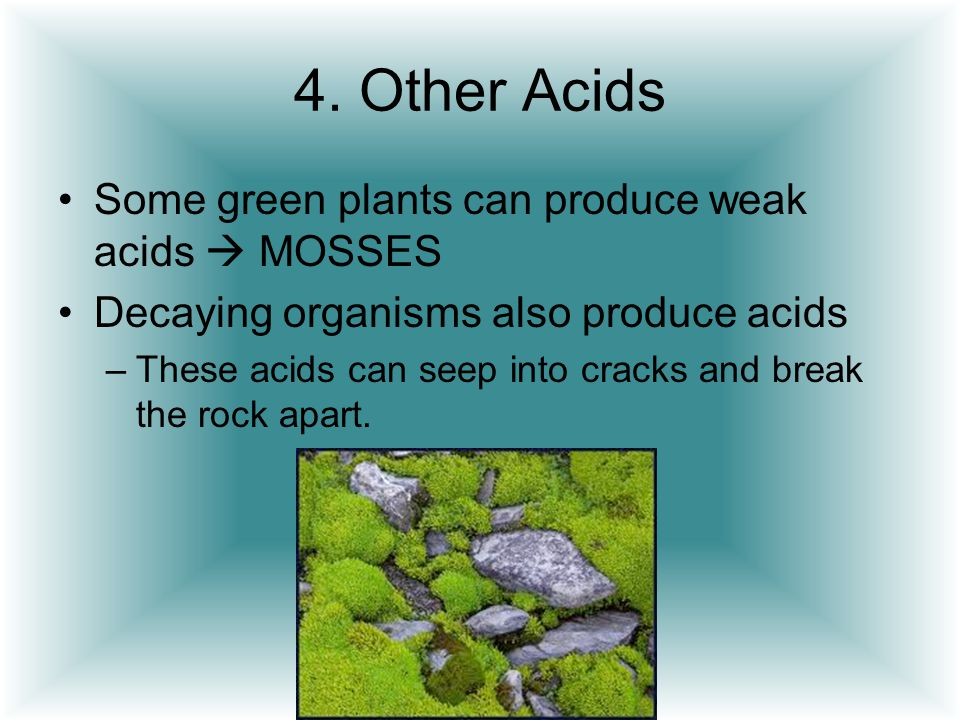 4. Other Acids Some green plants can produce weak acids  MOSSES