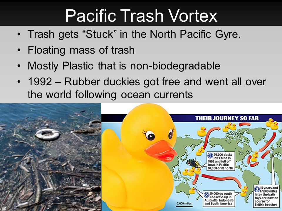 Pacific Trash Vortex Trash gets Stuck in the North Pacific Gyre.