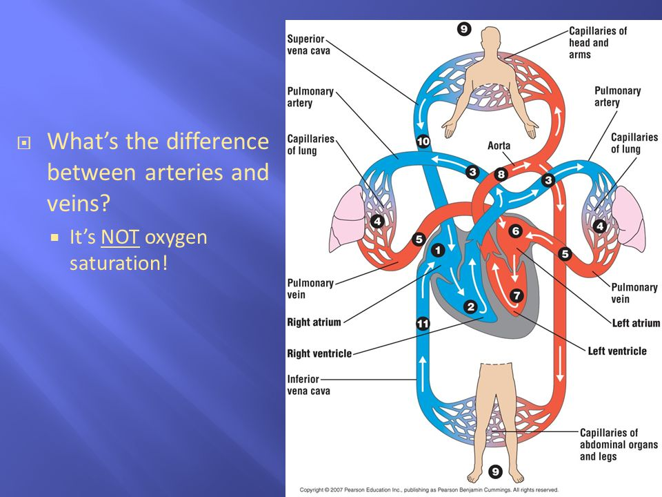 What's the difference between arteries and veins