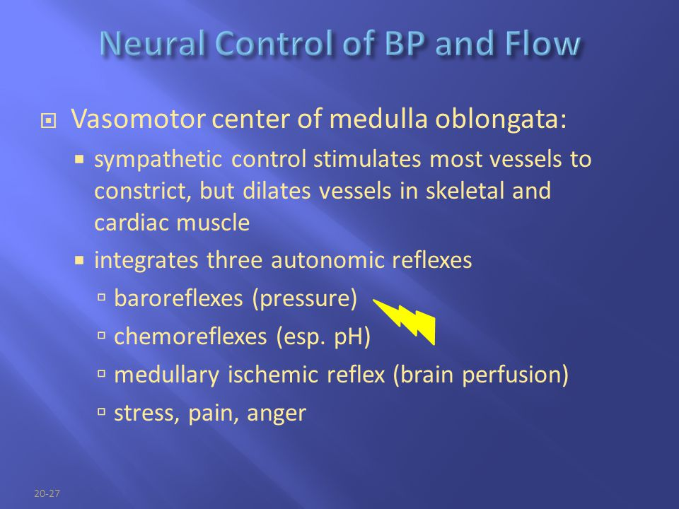 Neural Control of BP and Flow