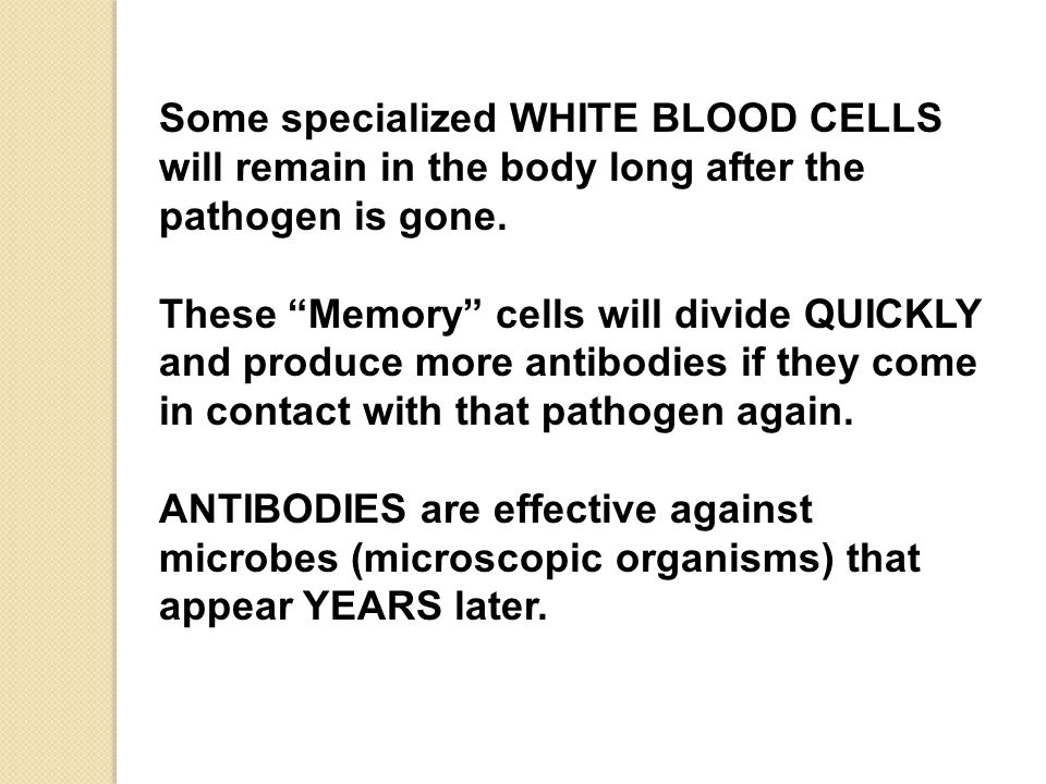 Some specialized WHITE BLOOD CELLS will remain in the body long after the pathogen is gone.