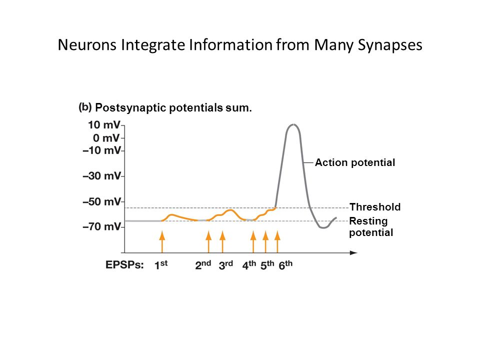 Neurons Integrate Information from Many Synapses