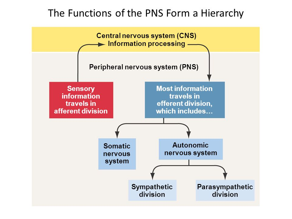 The Functions of the PNS Form a Hierarchy