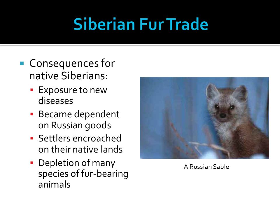 Siberian Fur Trade Consequences for native Siberians: