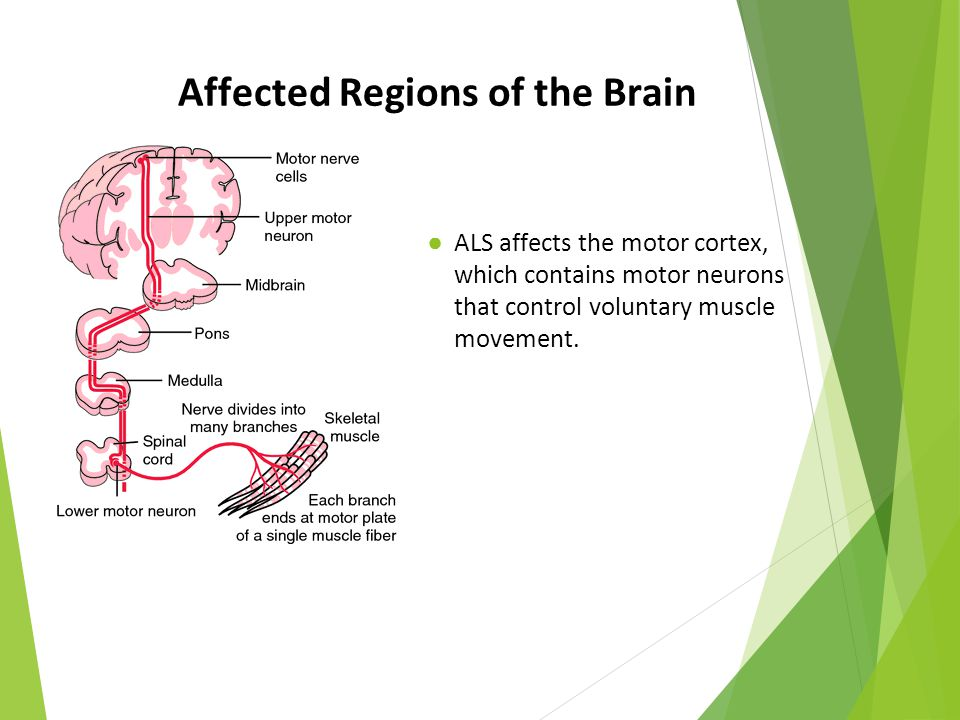 Affected Regions of the Brain