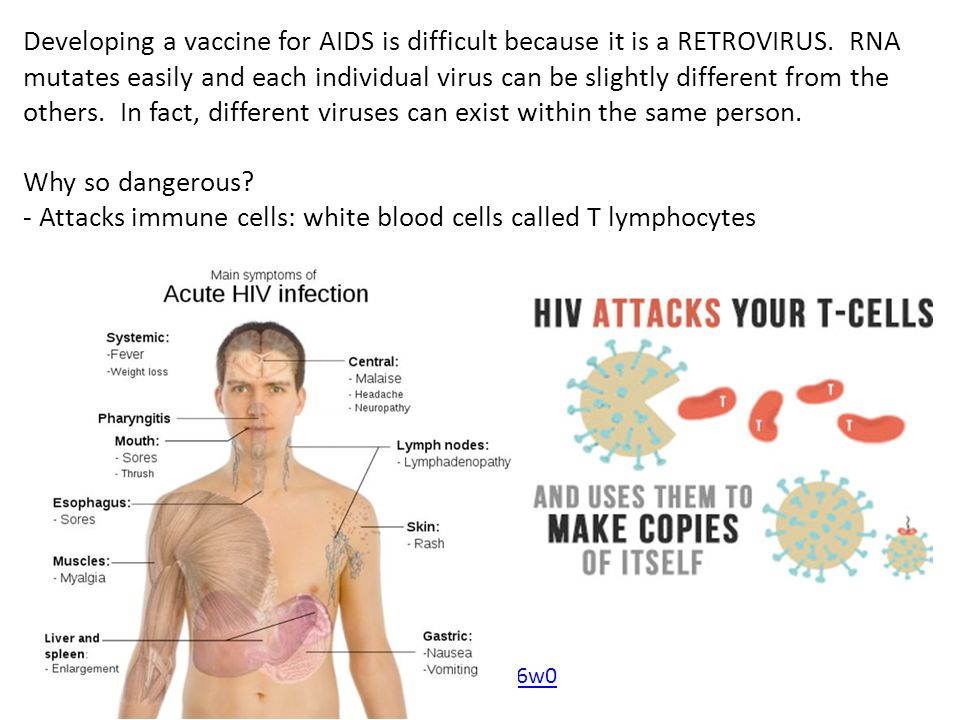- Attacks immune cells: white blood cells called T lymphocytes