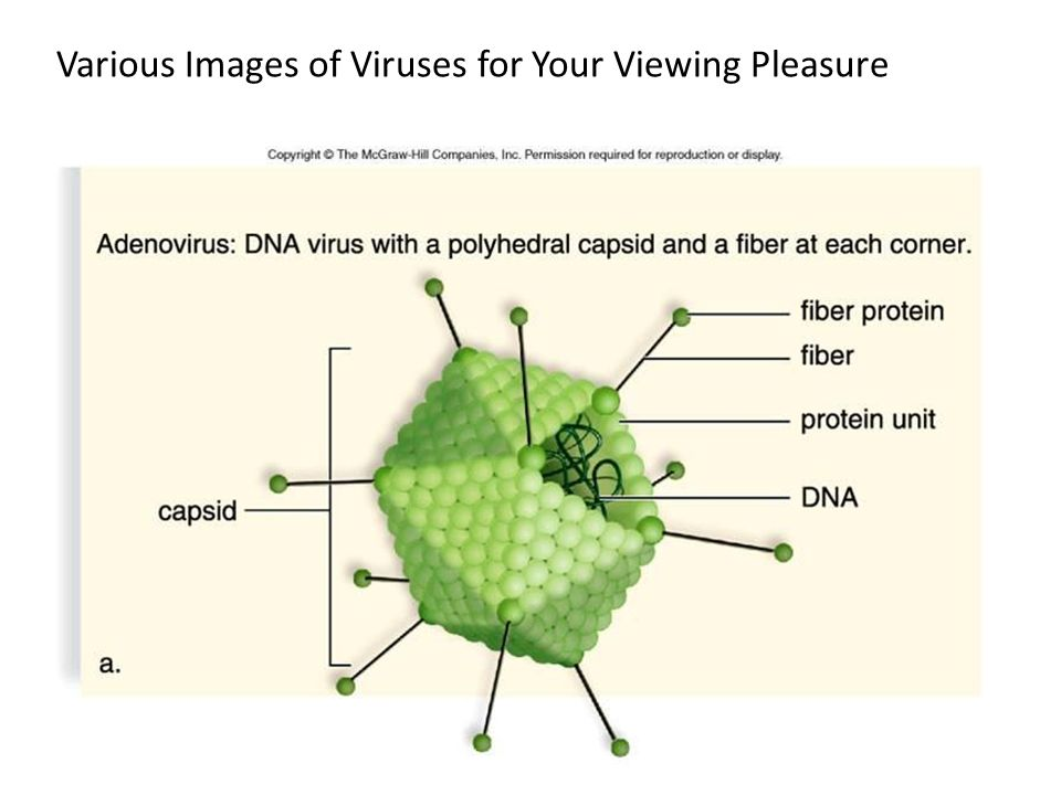 Various Images of Viruses for Your Viewing Pleasure