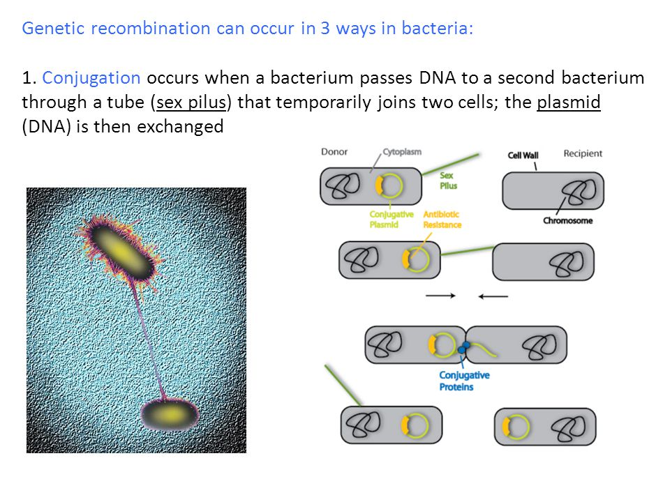 Genetic recombination can occur in 3 ways in bacteria: 1