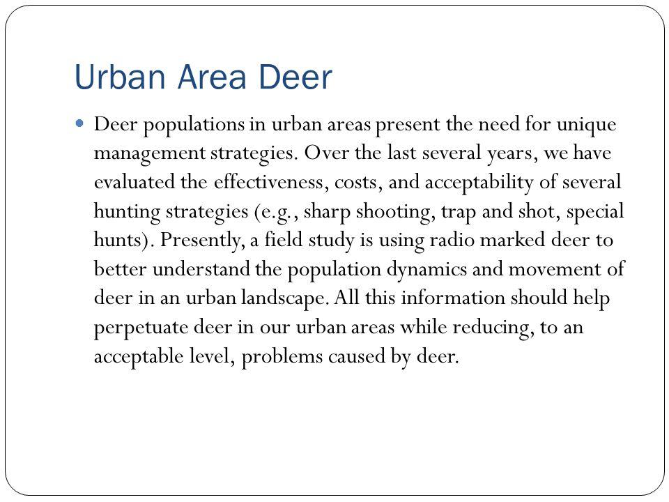 Urban Area Deer