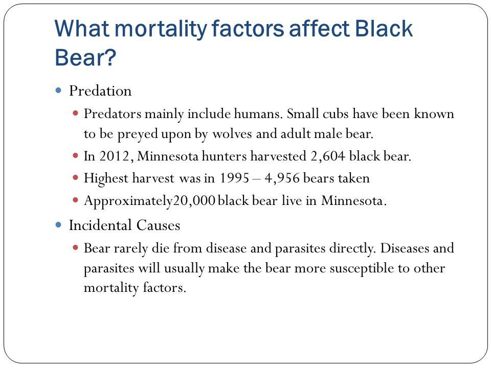 What mortality factors affect Black Bear