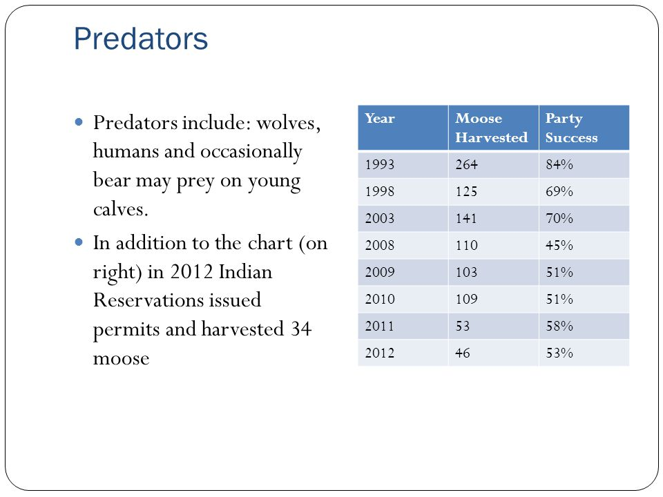 Predators Predators include: wolves, humans and occasionally bear may prey on young calves.
