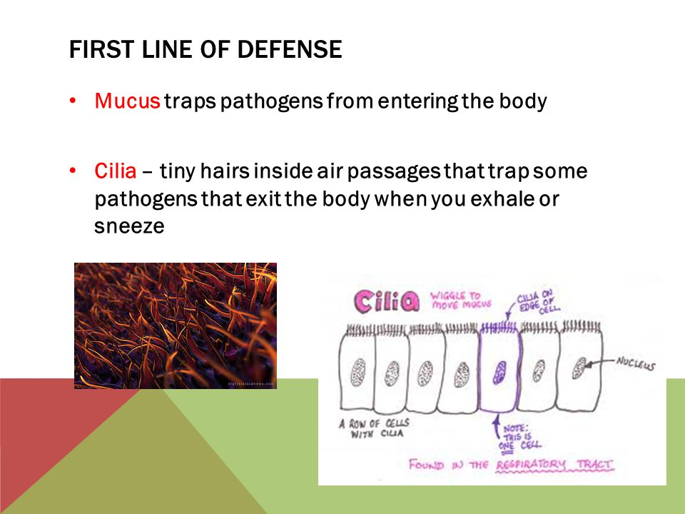 First line of defense Mucus traps pathogens from entering the body